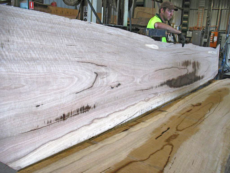 75mm thick Slab - Spotted Gum