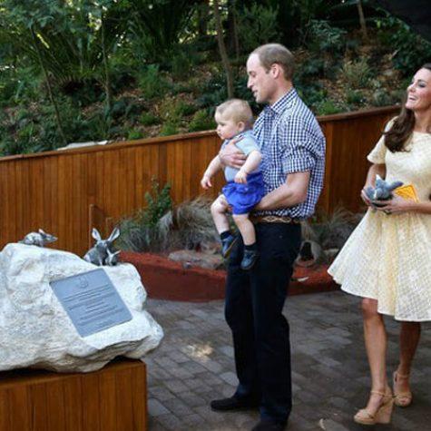 Blackbutt Cladding - Royals at Taronga