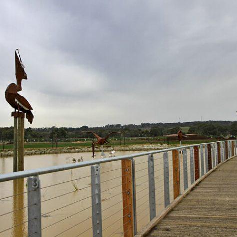 Spotted-Gum-Boardwalk